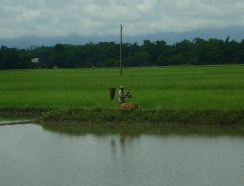 Free stock photo of farmer