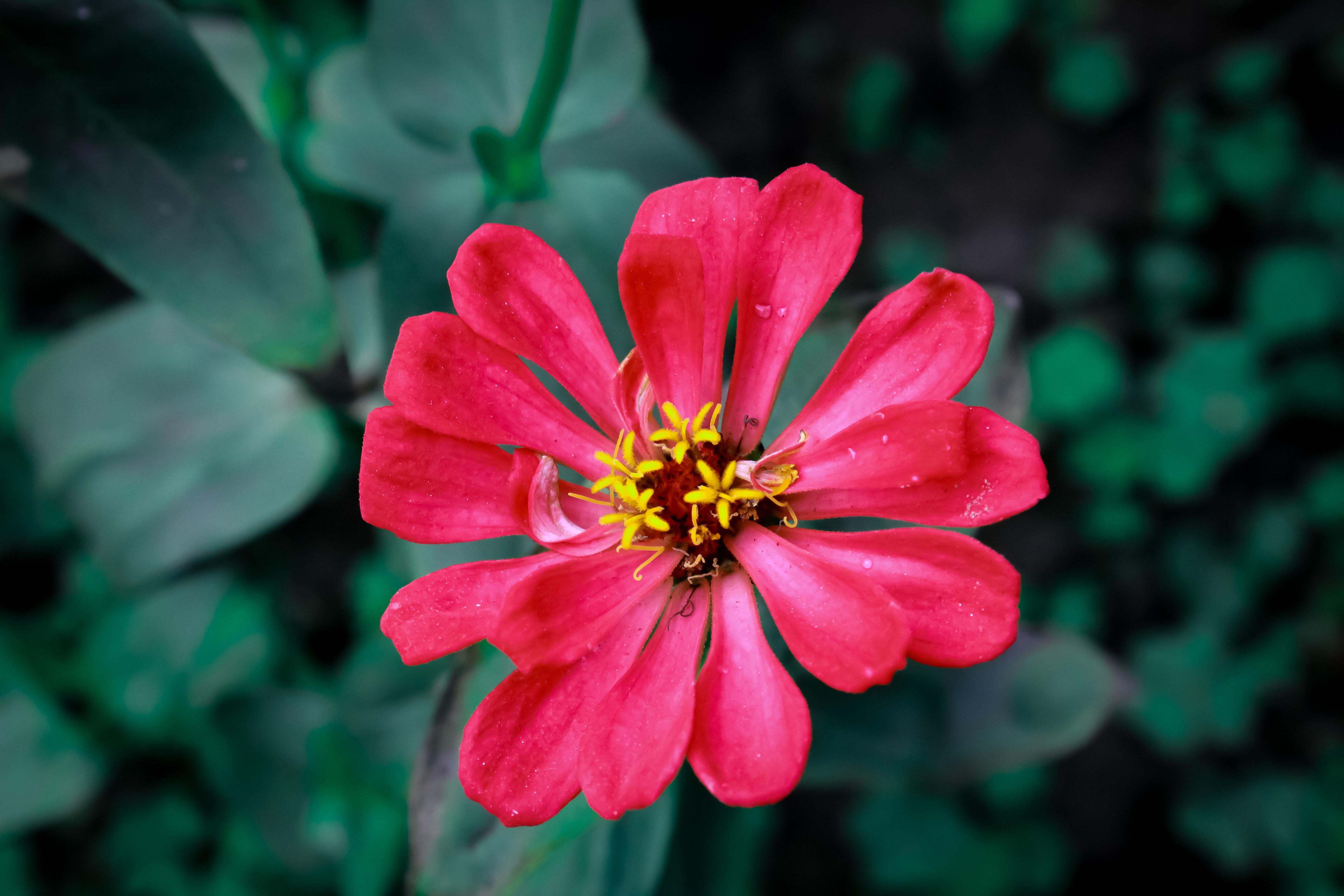 Free Stock Photo Of 4k Wallpaper Beautiful Flower Beauty