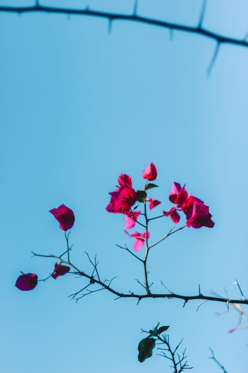 Kostenloses Stock Foto zu ast, blühen, blumen, blüte
