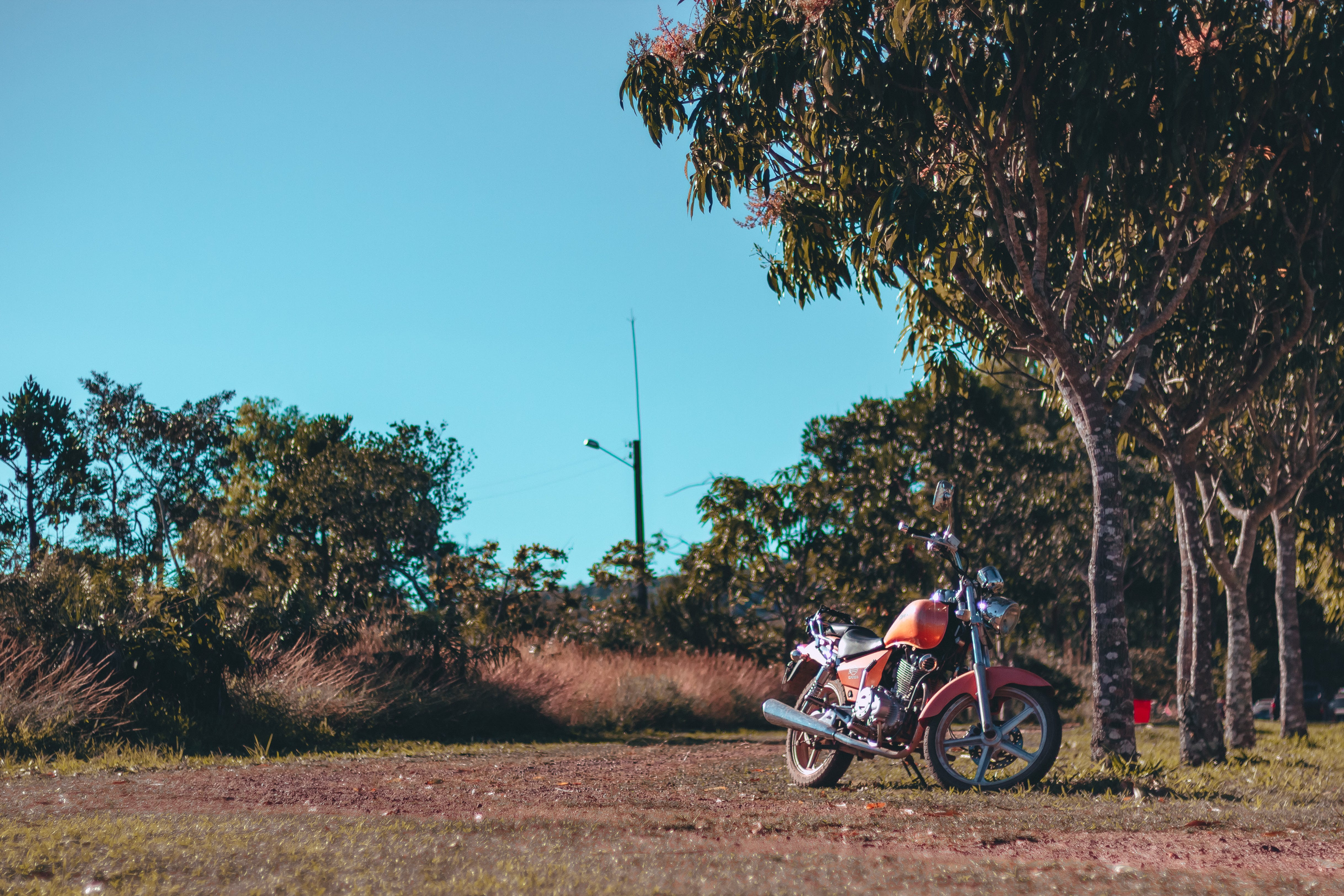 Red Motorcycle Parked Under Tree