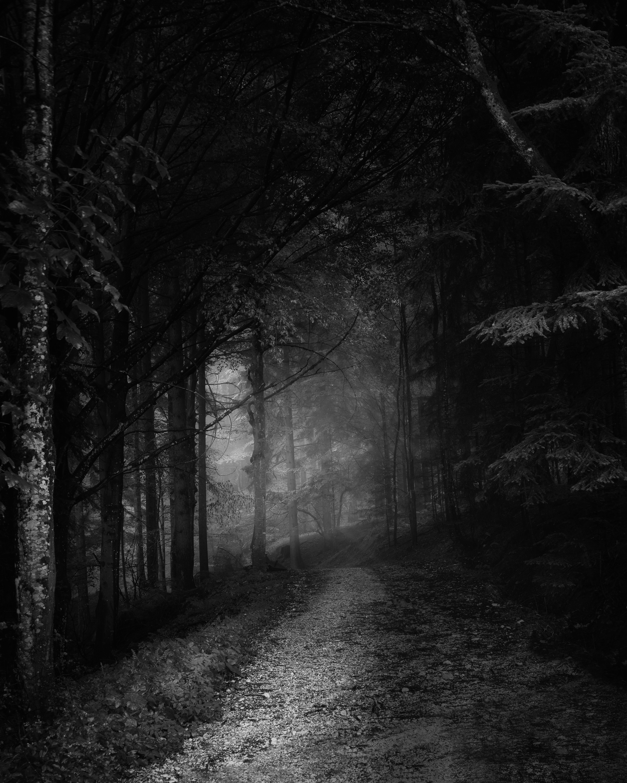 Free stock photo of austria, b+w, black and white, foot path