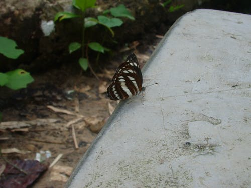 Free stock photo of brown butterfly