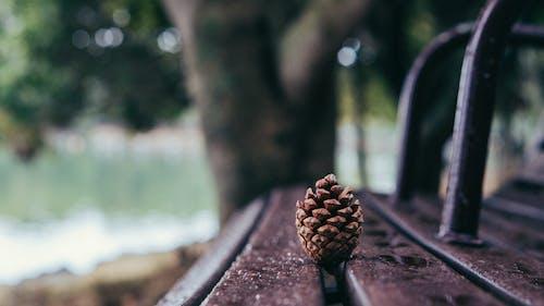 Безкоштовне стокове фото на тему «Вибірковий фокус, глибина різкості, Денне світло, дерев'яна лавка»