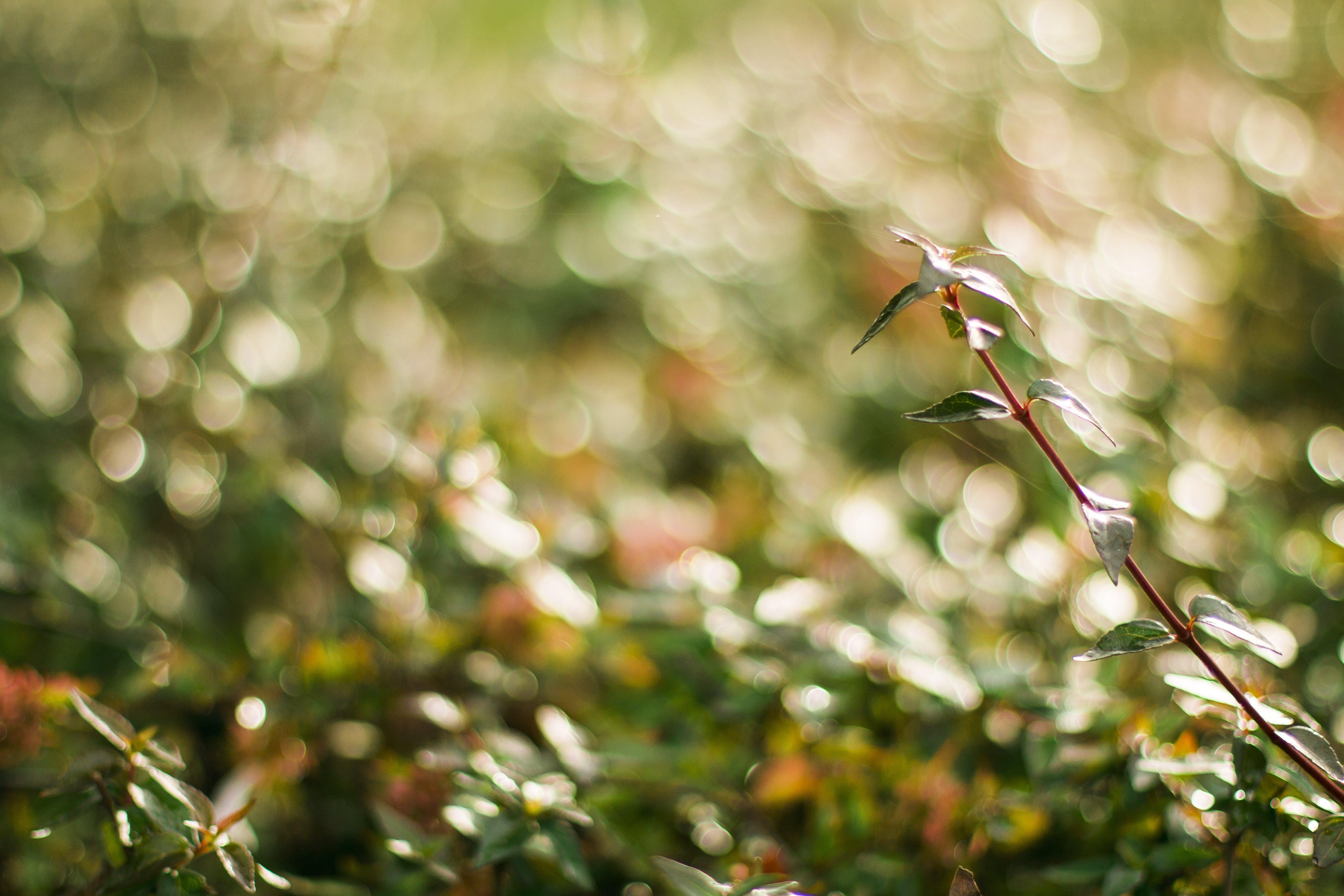Free stock photo of bokeh, green, nature, photography