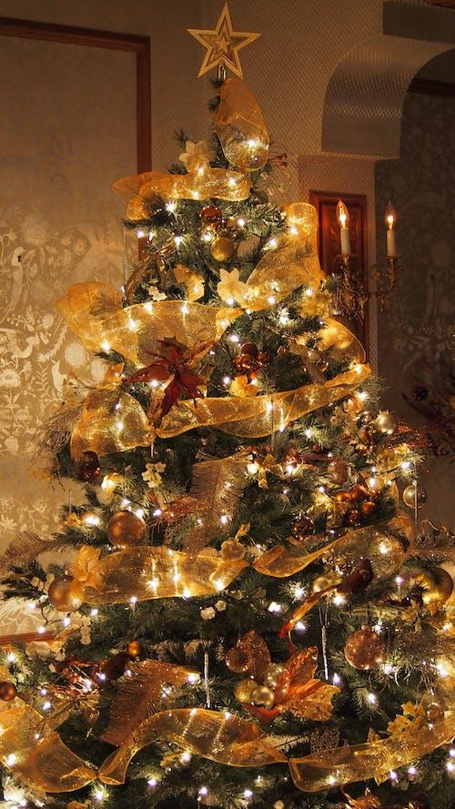 Free stock photo of christmas, christmas time, christmas tree