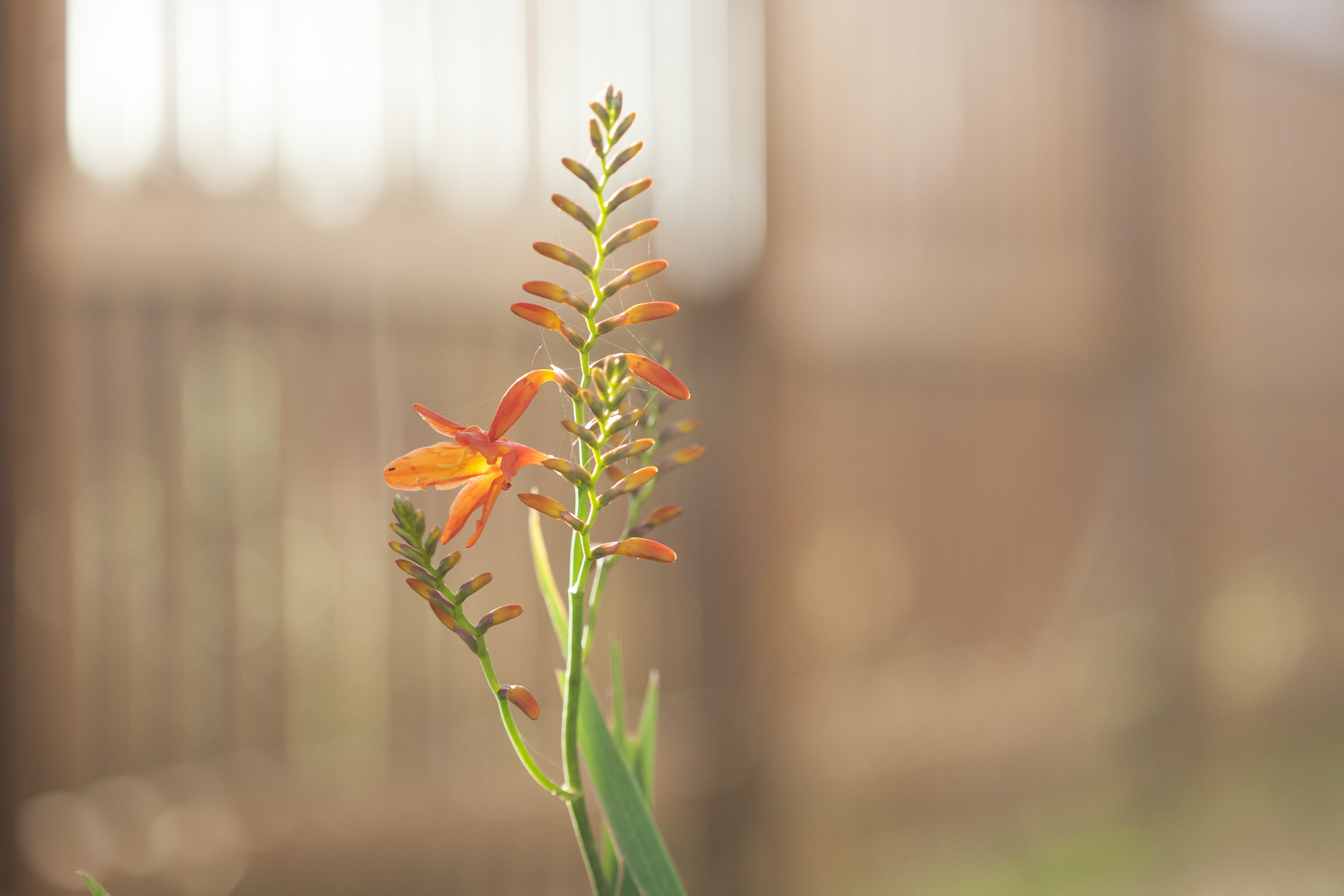 Free stock photo of bokeh, flower, flowers, grass