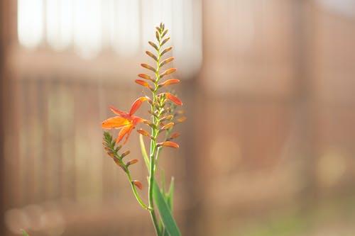 Fotobanka sbezplatnými fotkami na tému kvet, kvety, oranžový kvet, príroda