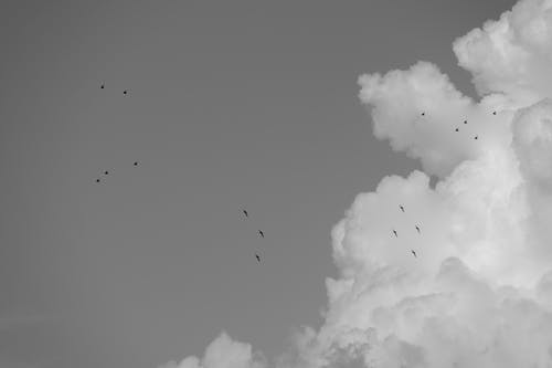 Free stock photo of beauty in nature, black and white, bw, clouds