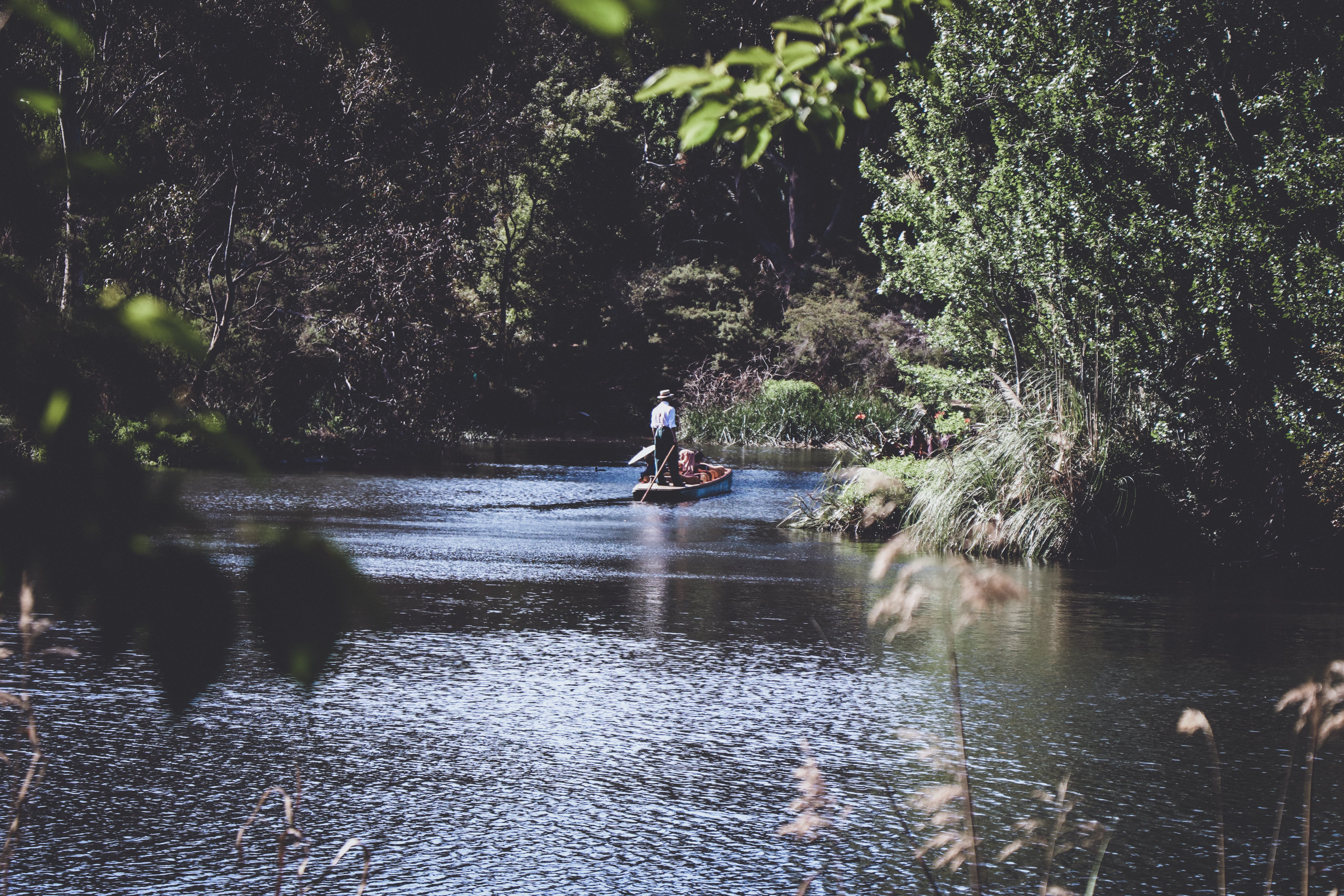 Person on Canoe Surrounded by Trees