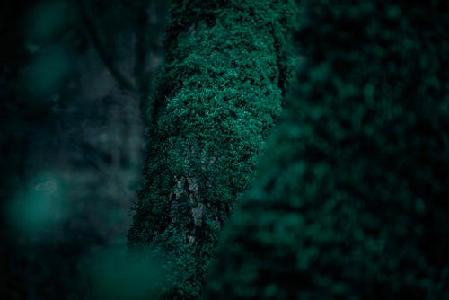 Free stock photo of forest, green, greenish, jungle