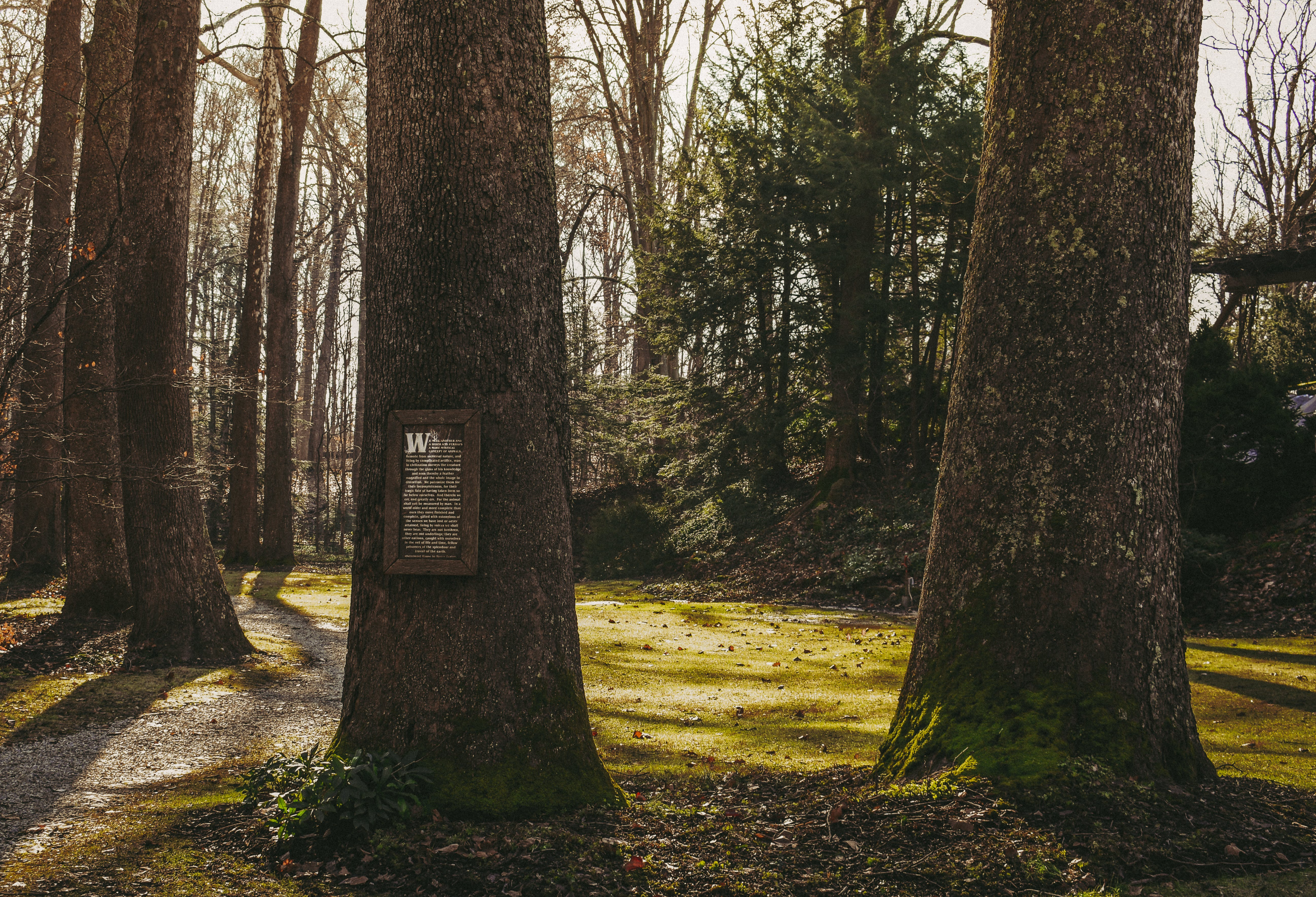 Foto profissional grátis de alvorecer, árvores, aumento, caminho