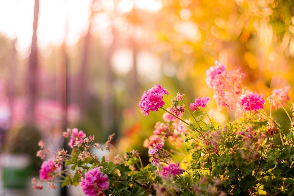 bloom, blossom, floral - b&q