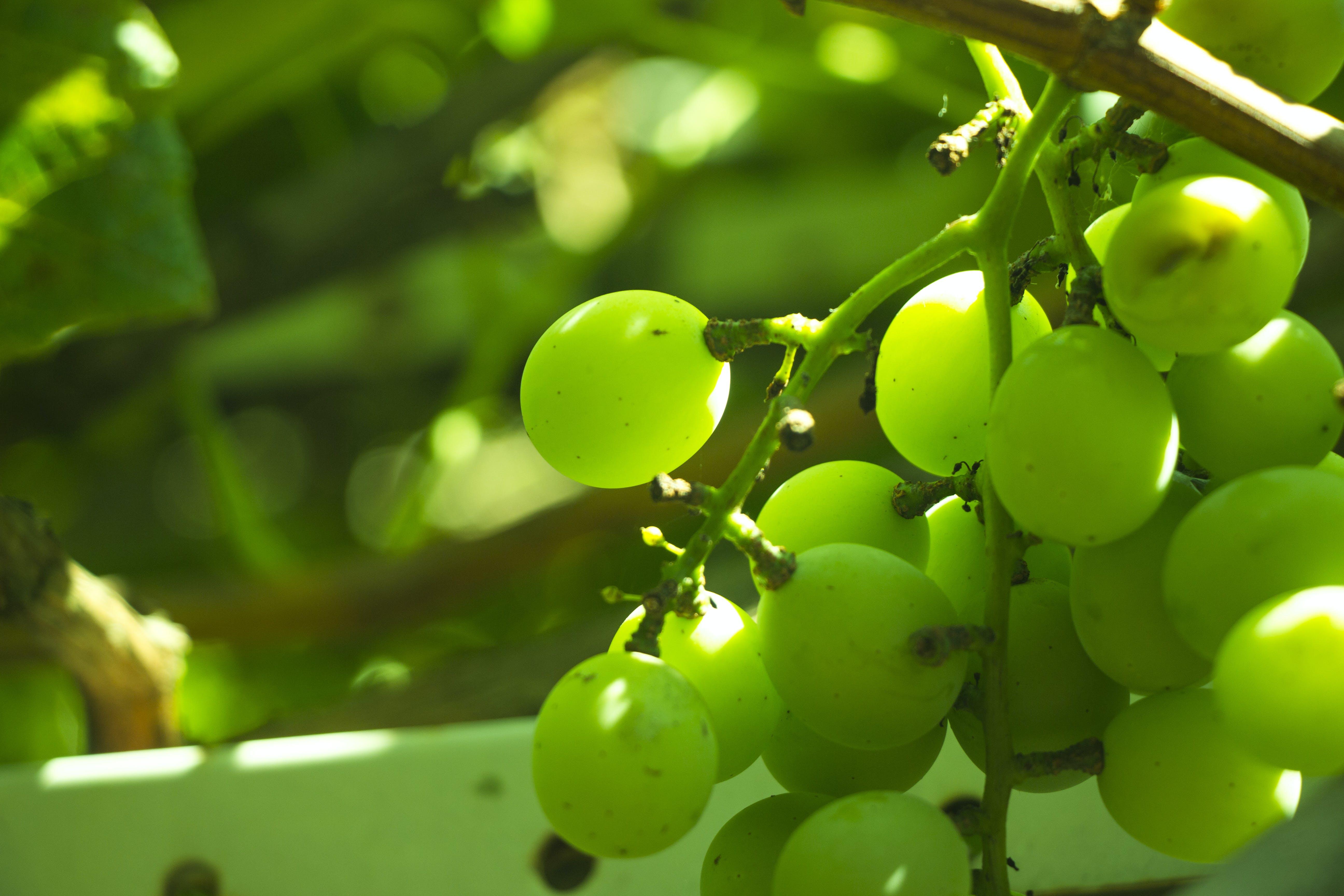 Kostenloses Stock Foto zu baum, grün, natur, sonnig