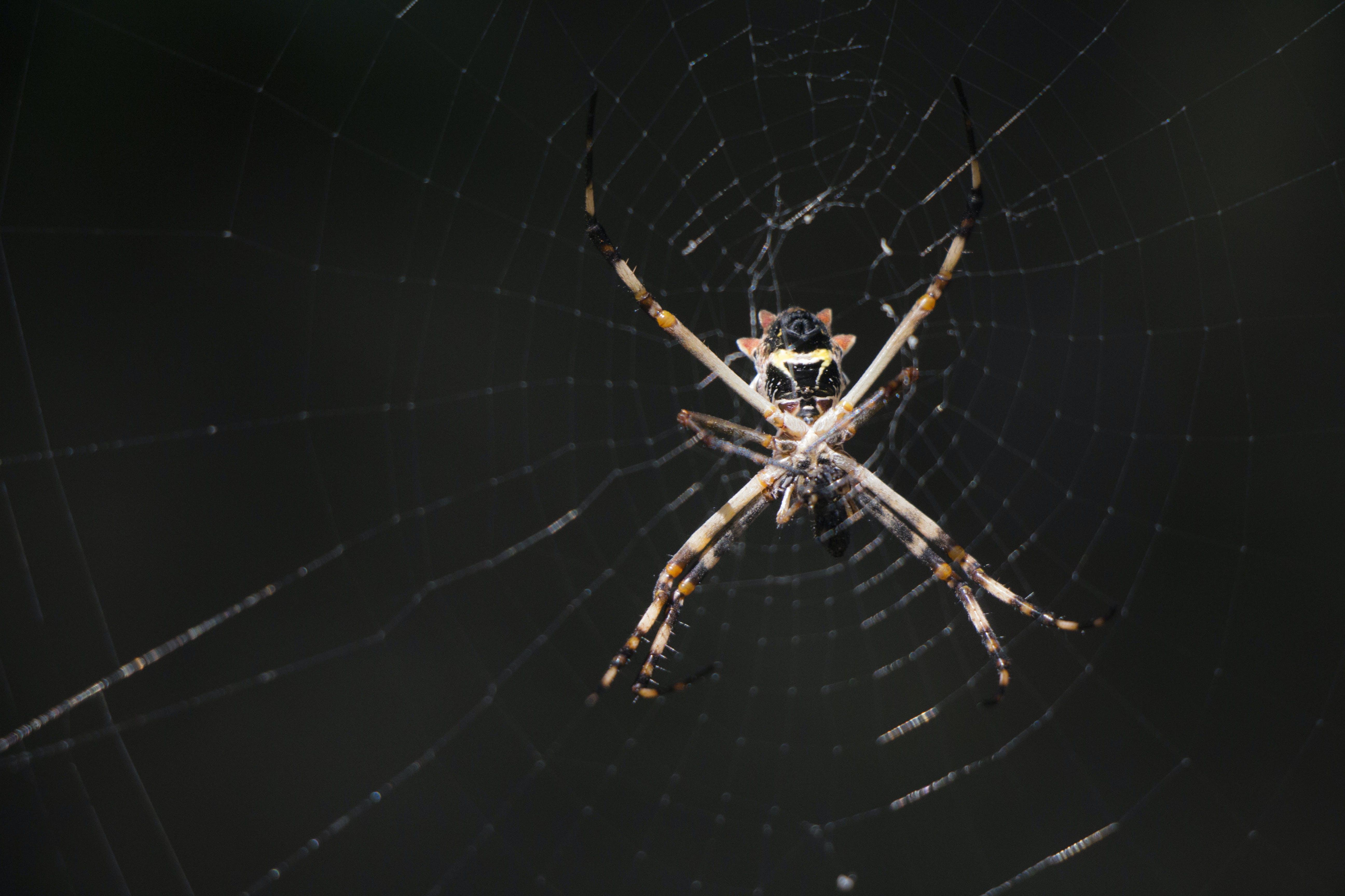 Kostenloses Stock Foto zu dunkel, netz, spinne, spinnweben