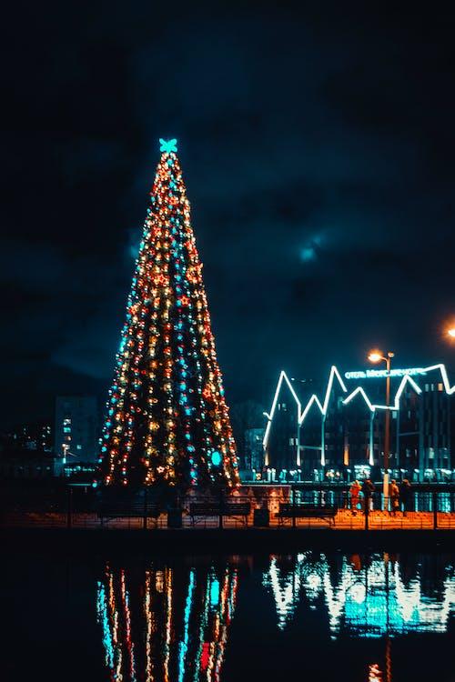 Imagine de stoc gratuită din beculețe de crăciun, brad de crăciun, lumini de crăciun, noapte