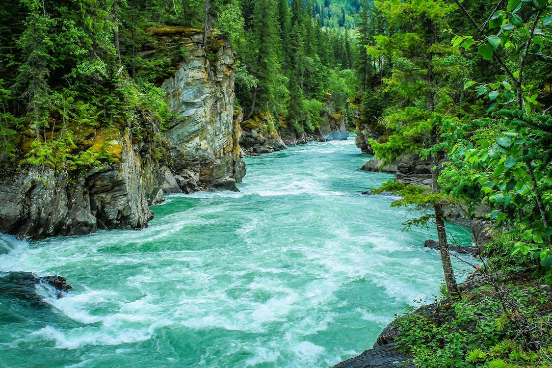 Río Entre árboles De Hojas Verdes