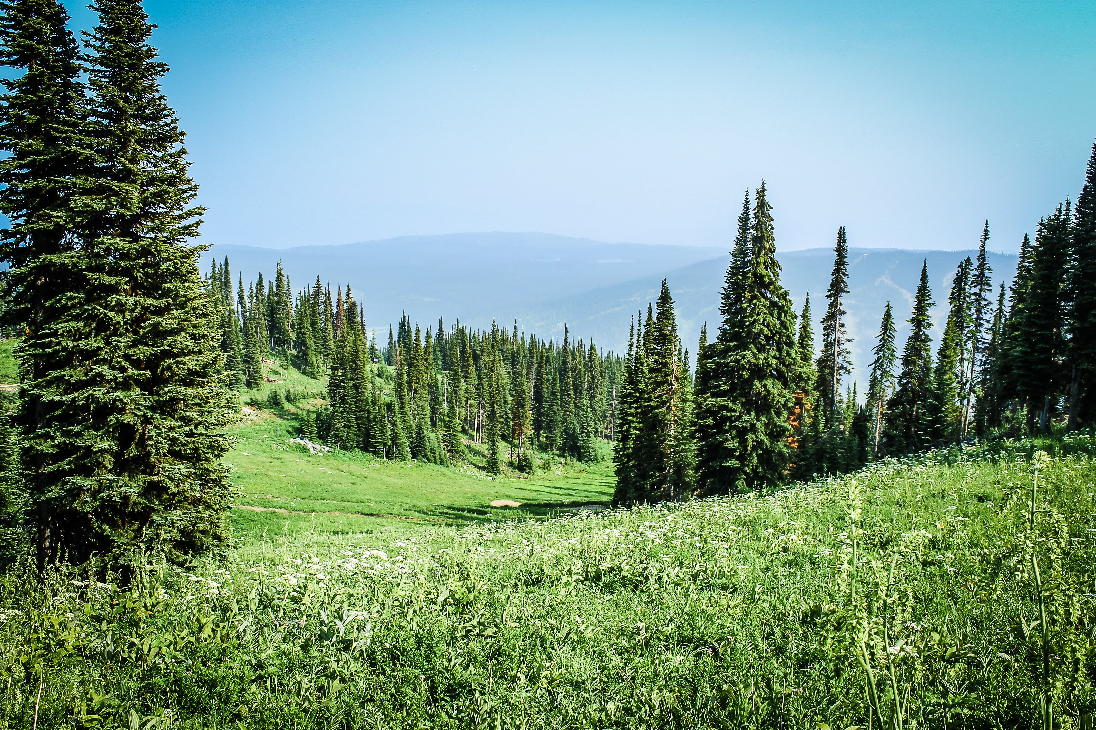 Ilmainen kuvapankkikuva tunnisteilla alppien niitty, havupuut, heinäpelto, ikivihreä