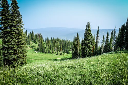 Foto d'estoc gratuïta de arbres, camp, camp d'herba, camp de cereals