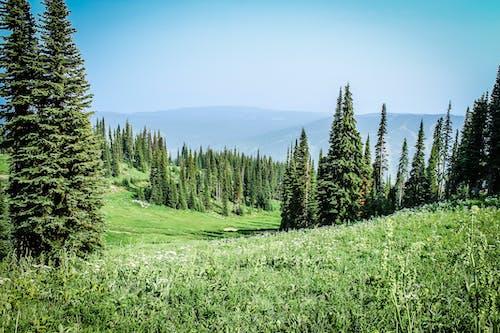 Kostenloses Stock Foto zu almwiese, bäume, blauer himmel, blumenfeld