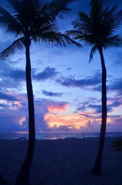 Foto d'estoc gratuïta de alba, arbres, bellesa, bellesa a la natura