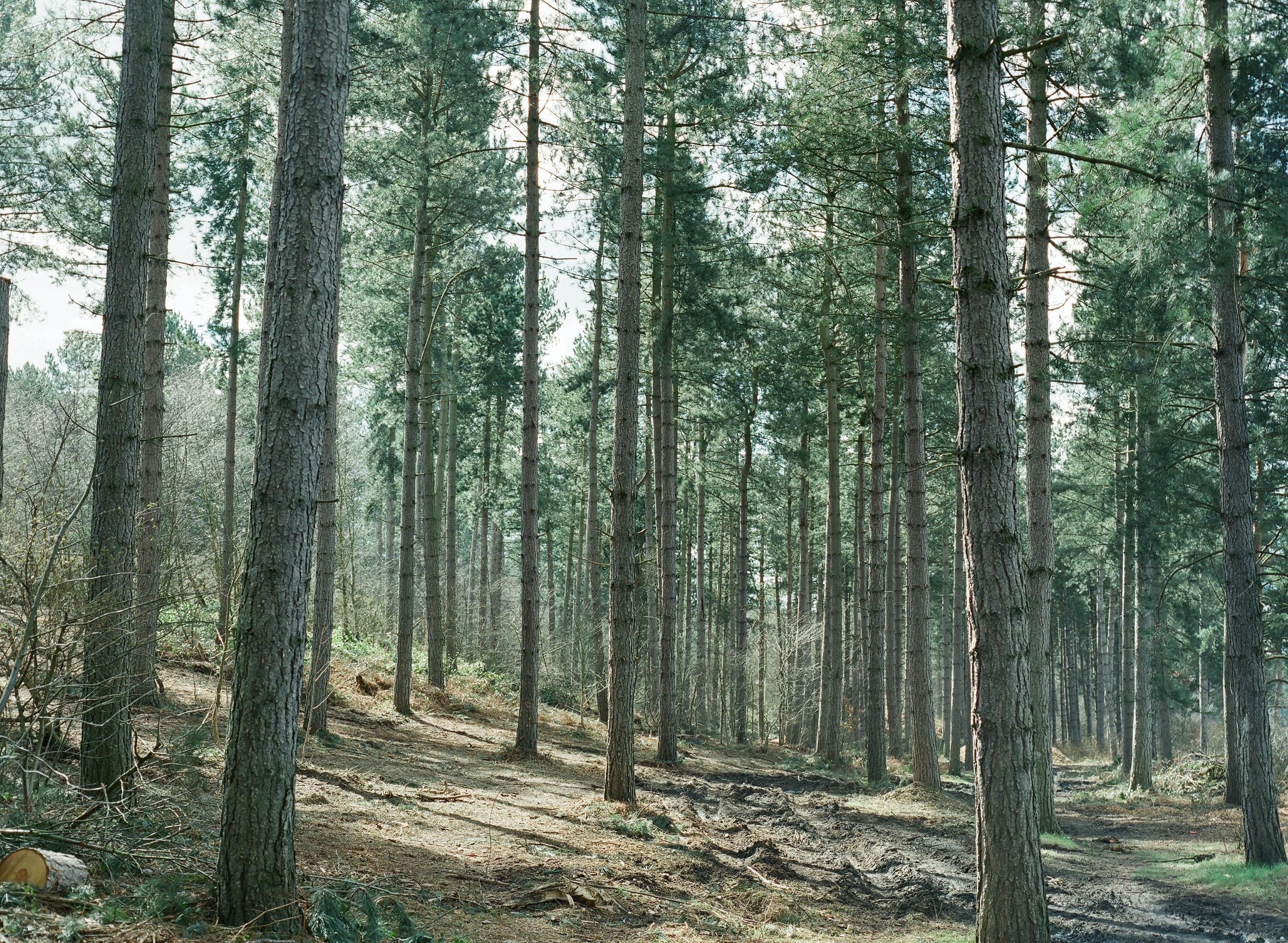 brown dirt road between green leaved trees during daytime