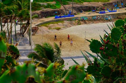 Foto d'estoc gratuïta de actiu, activitat d'estiu, atletes, brasil