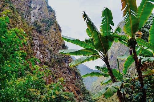 Foto d'estoc gratuïta de bellesa a la natura, caminada, excursionista, exuberant