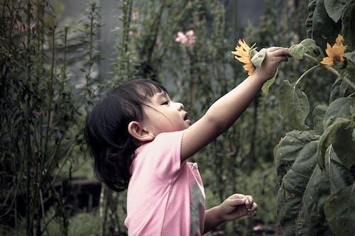 Ảnh lưu trữ miễn phí về cây, con gái, dễ thương, hệ thực vật