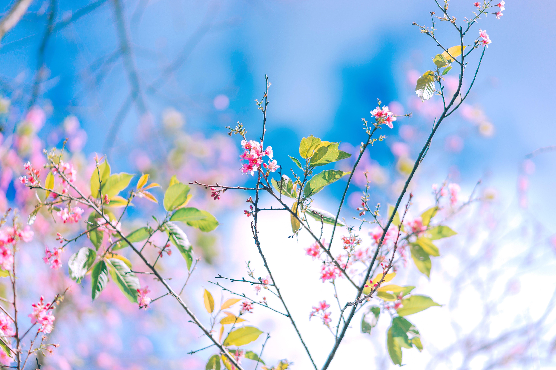 Gratis lagerfoto af blomster, flora, gren, have