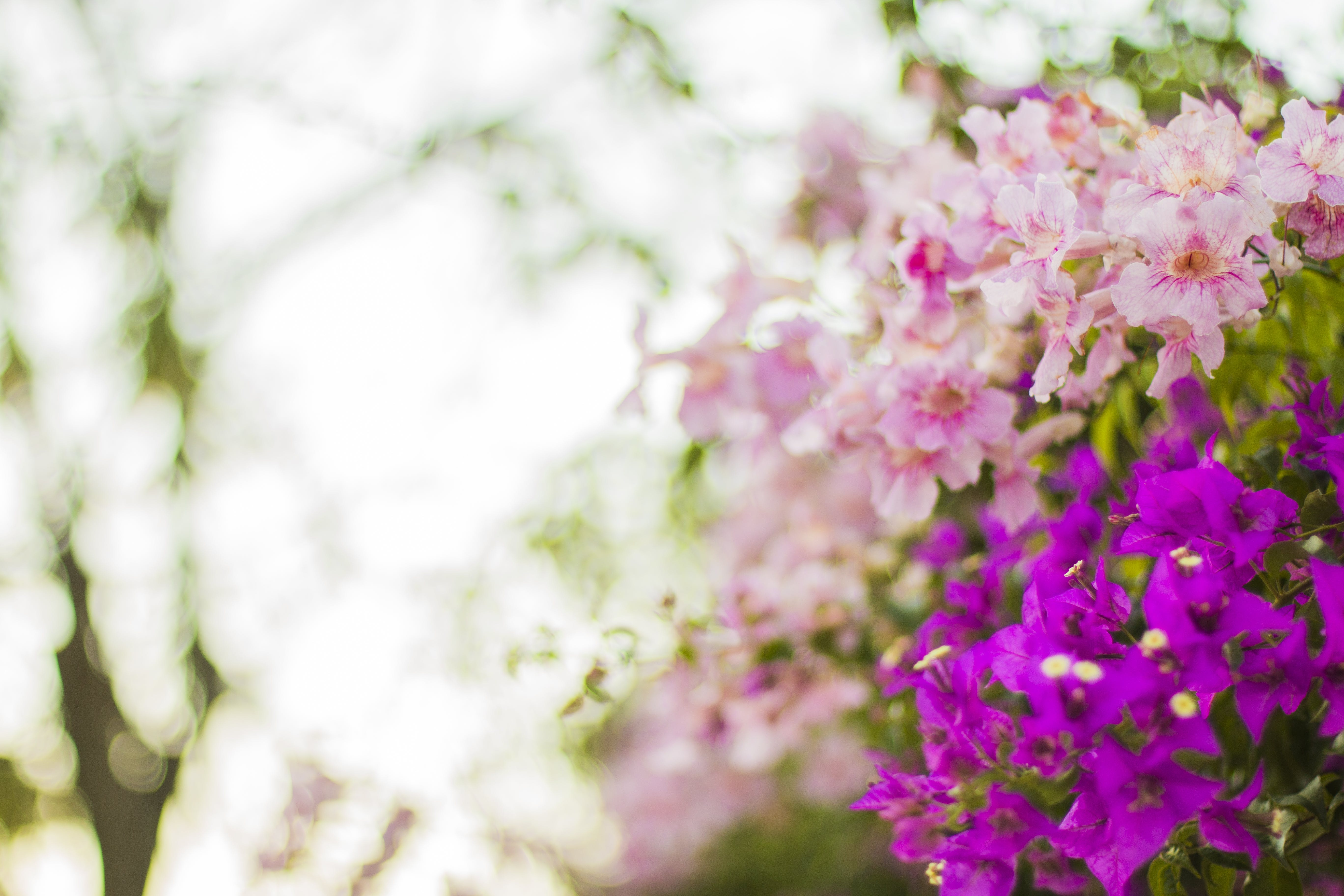 Purple and Pink Flowers in Selective Focus Photography