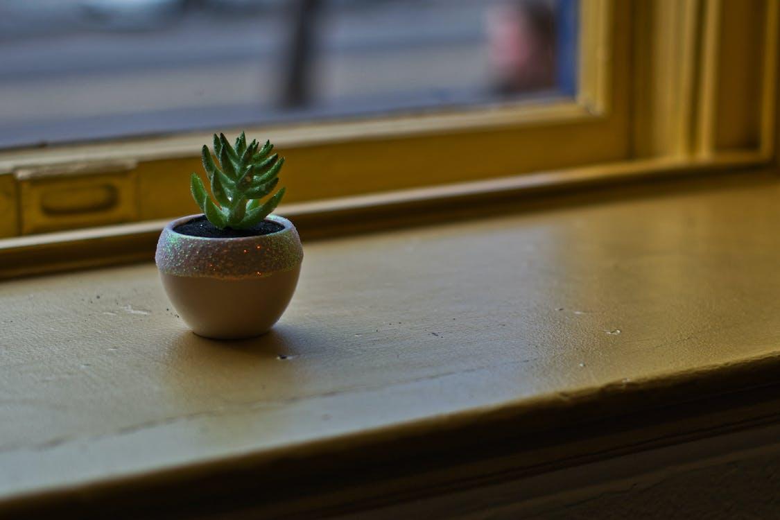 ahşap, bitki, büyüme