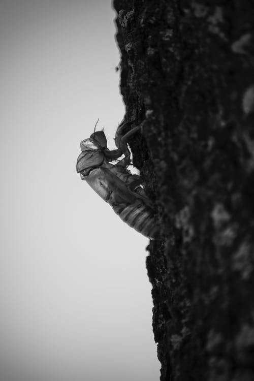 ağaç, ahşap, böcek, dizayn içeren Ücretsiz stok fotoğraf