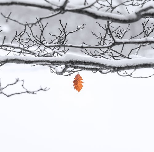 Gratis lagerfoto af forkølelse, hvid, januar, sne