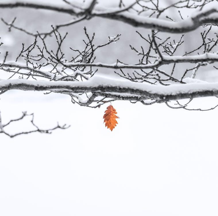 감기, 겨울, 눈