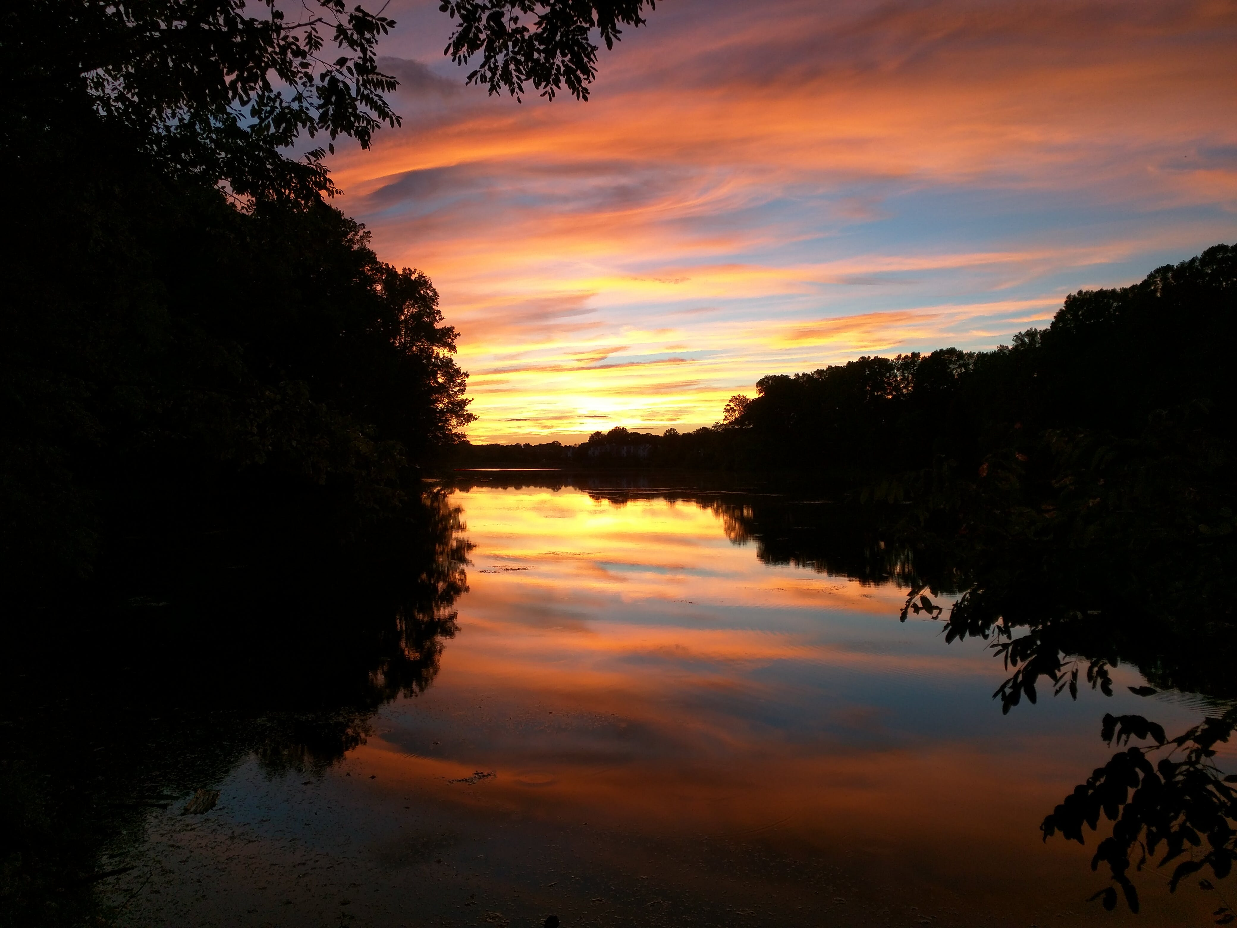 Silhouette Photography of Body of Water Between Trees during Golden Hour