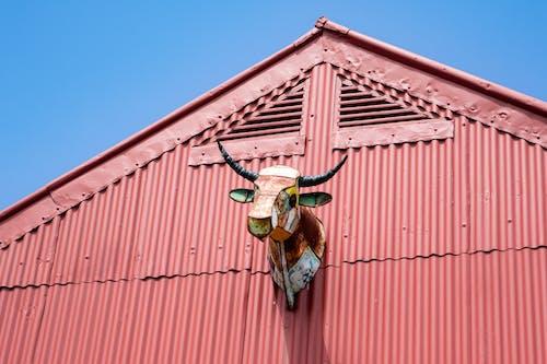 Gratis stockfoto met architectuur, blauwe lucht, boerderij, boerderijdier