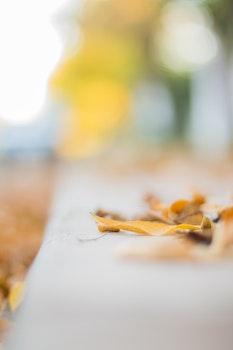 Free stock photo of nature, leaf, leaves, autumn