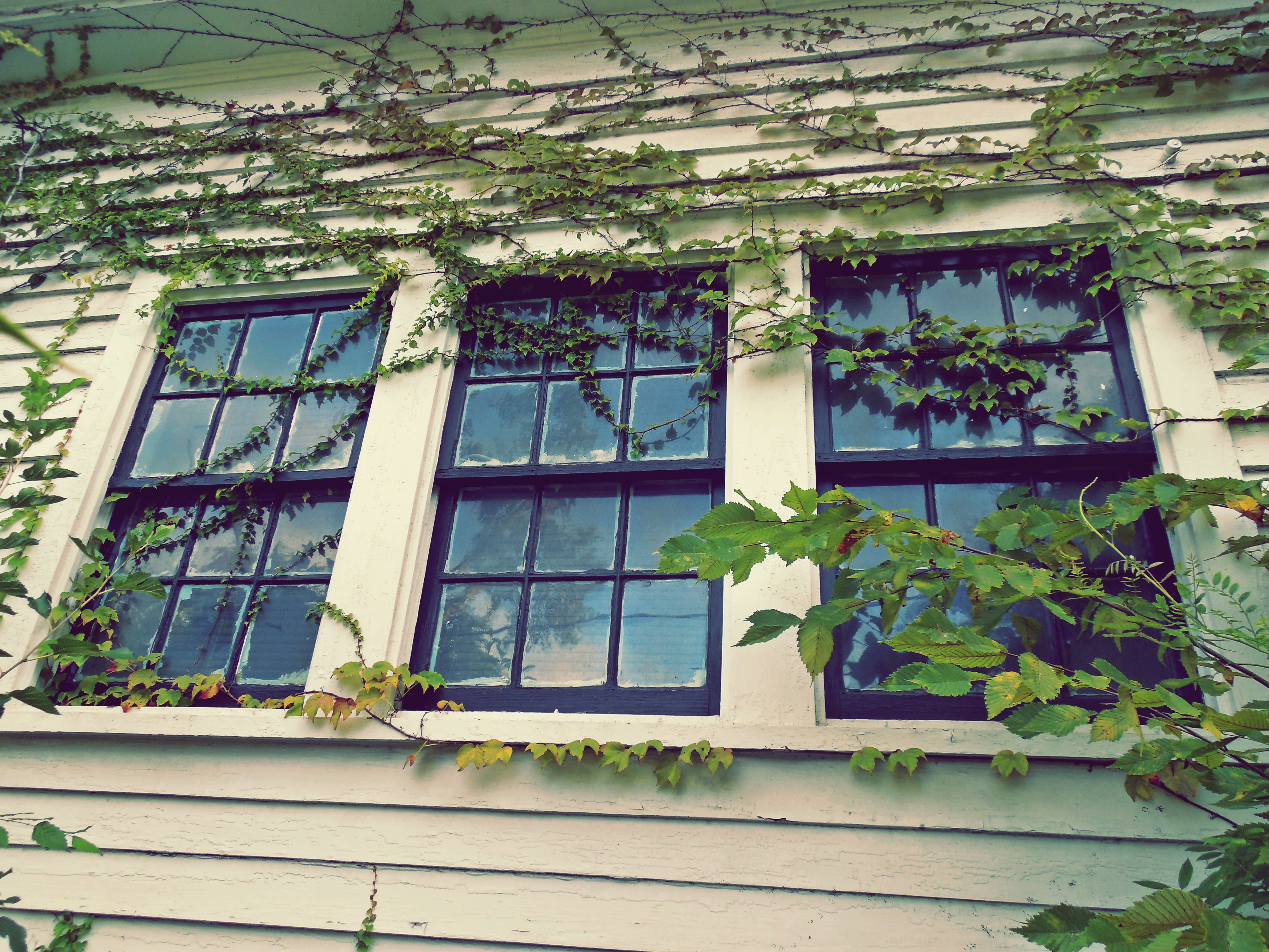 3 Closed Window Pane Slightly Covered With Green Vines at Daytime