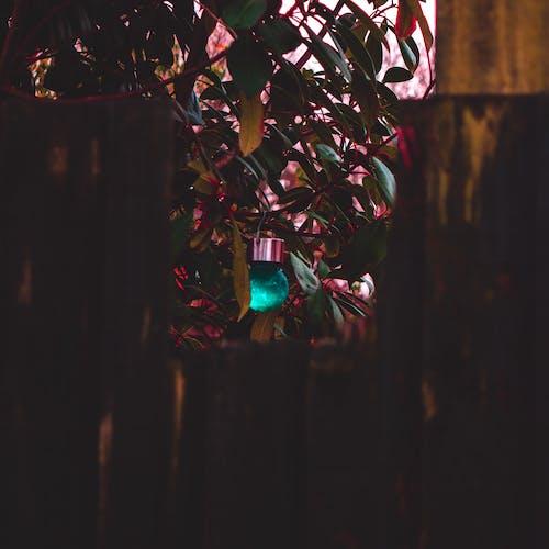Foto profissional grátis de azul, baile, castanho, cerca