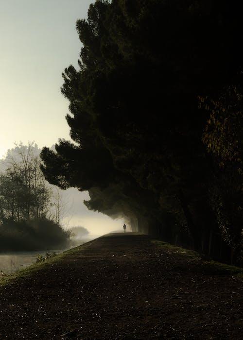 Foto profissional grátis de árvores, enevoado, escuro, garoa