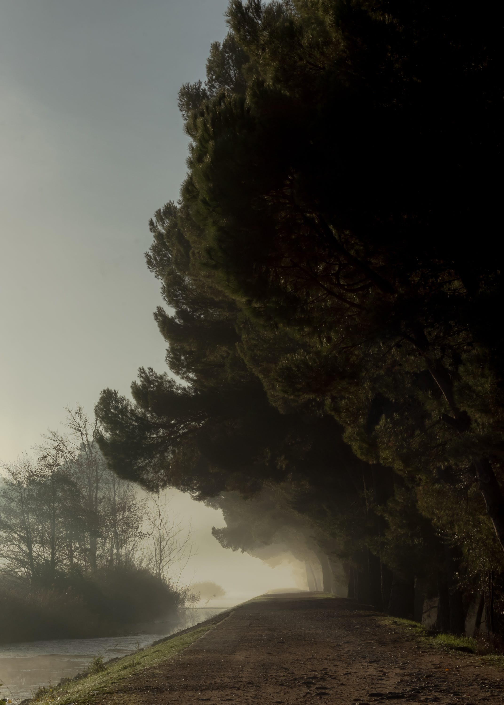 Kostenloses Stock Foto zu bäume, dämmerung, holz, landschaft