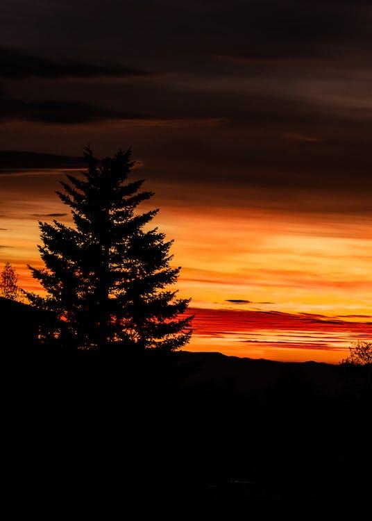 alvorecer, amanhecer, árvore