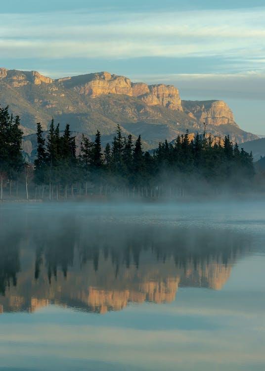 arbres, brouillard, brume