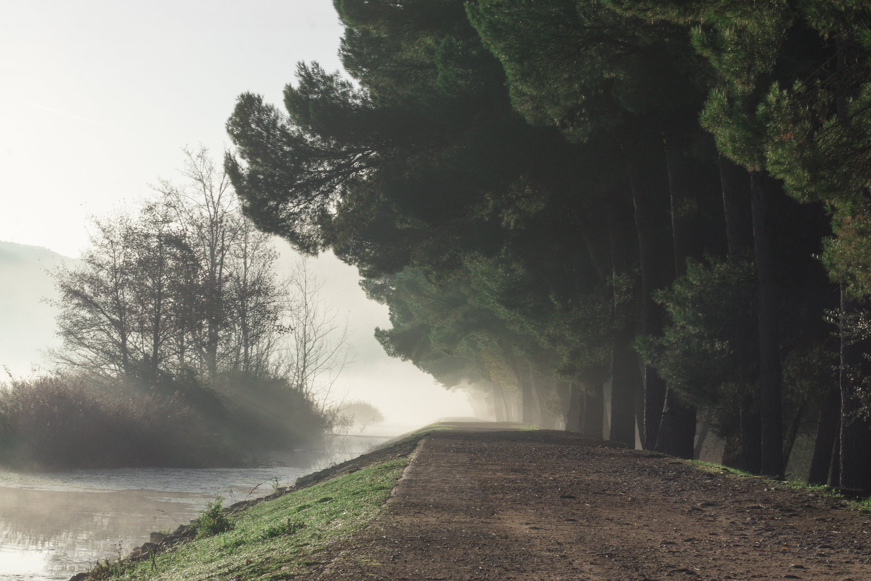 Mist Covered Dirt Road