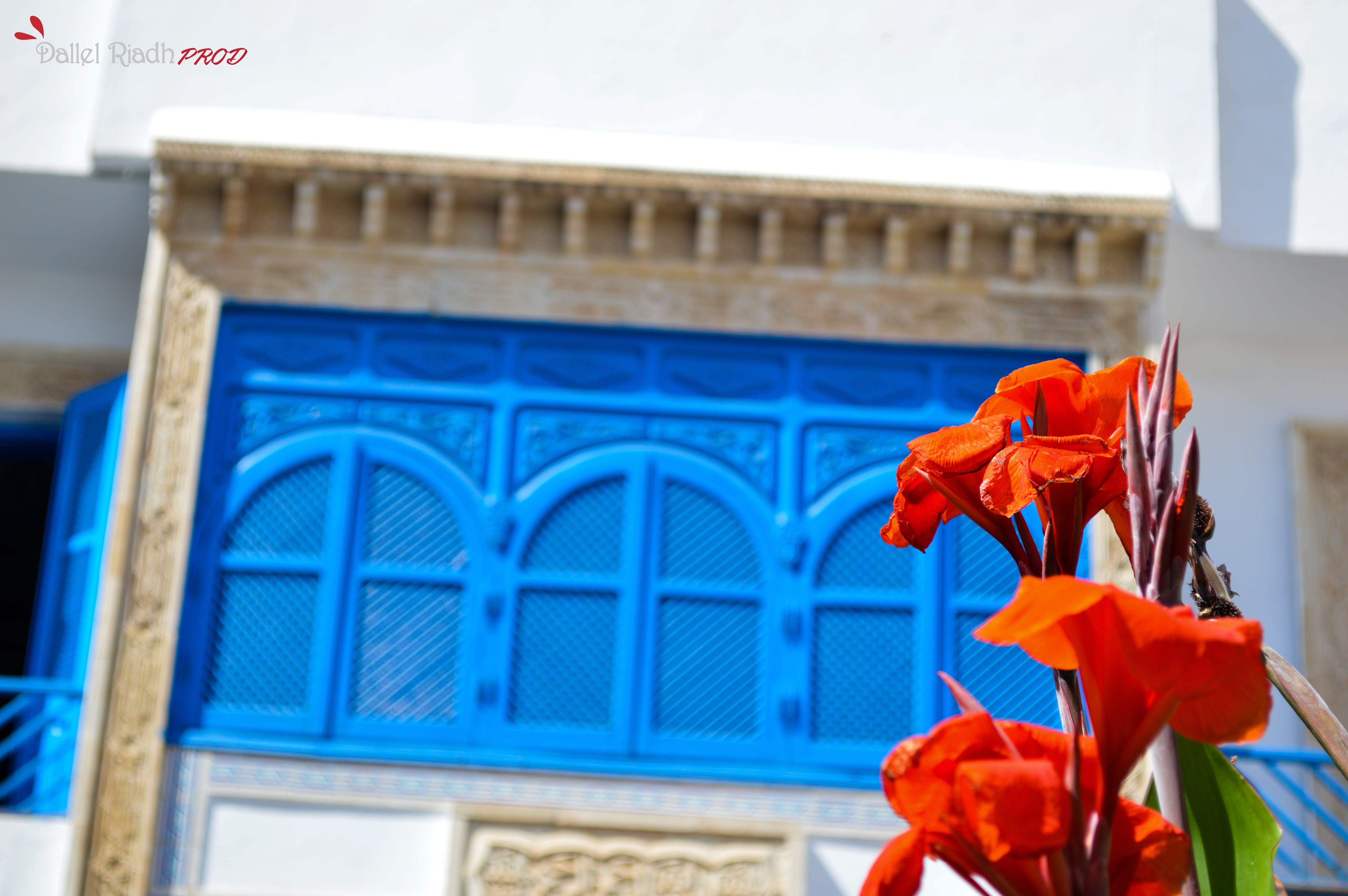 Free stock photo of red, blue, windows, beautiful flowers