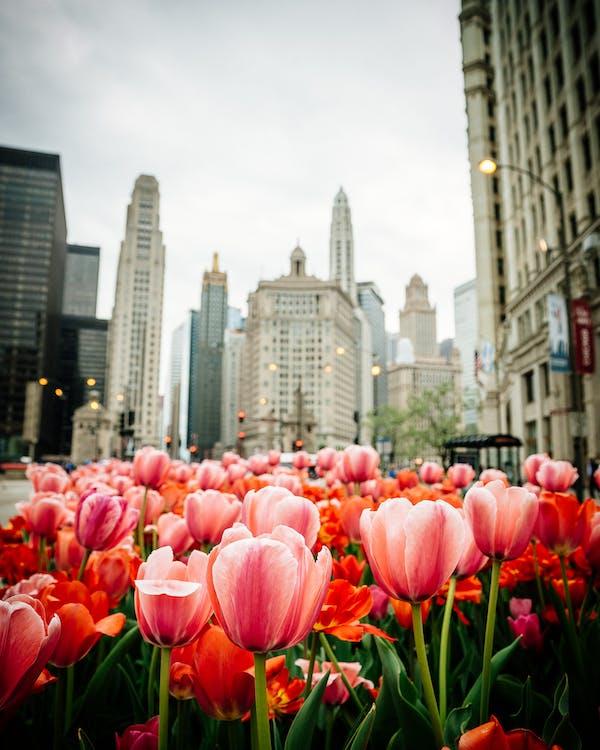 ciudad, edificios, flor
