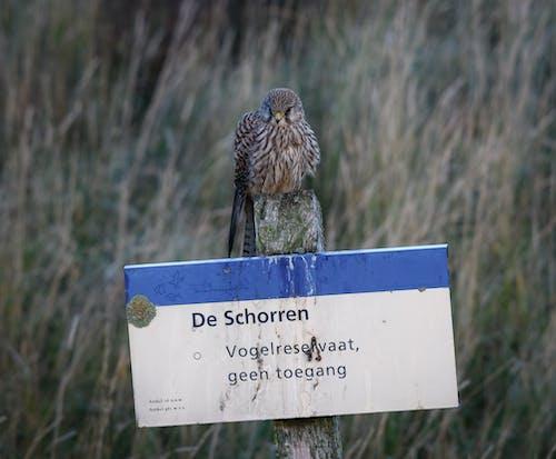 Imagine de stoc gratuită din natură, pasăre de pradă, șoim, texel