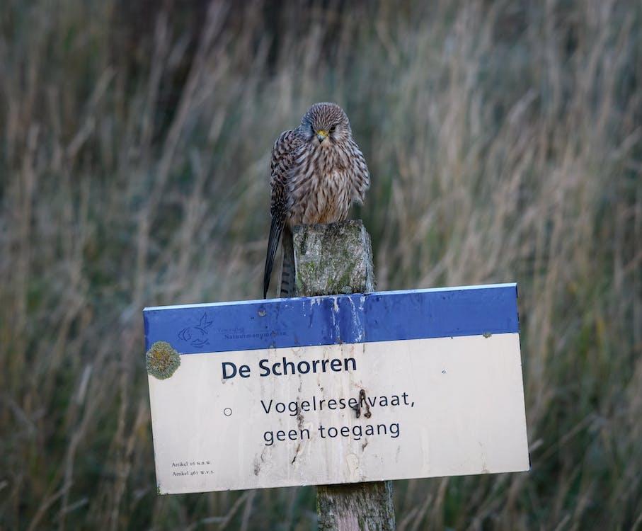 Δωρεάν στοκ φωτογραφιών με texel, αρπακτικό πουλί, γεράκι