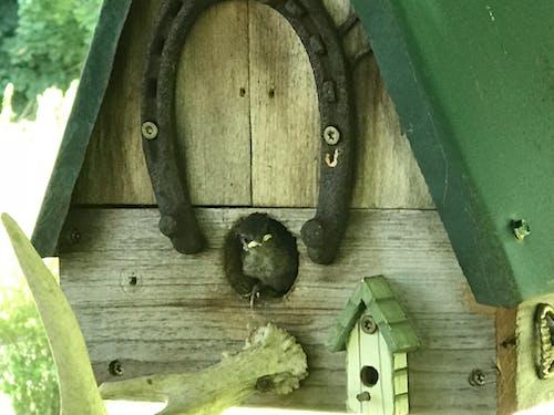 Foto profissional grátis de bebê pássaro, casa de passarinho