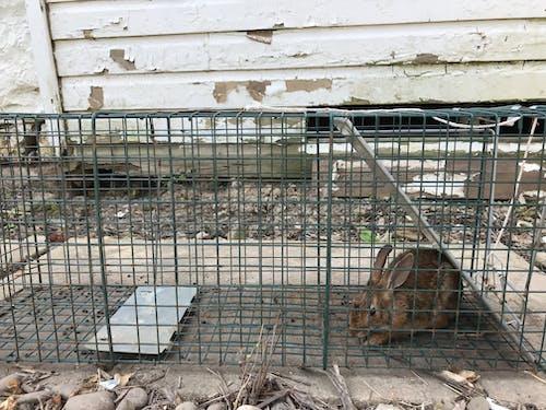 Foto profissional grátis de coelho, preso